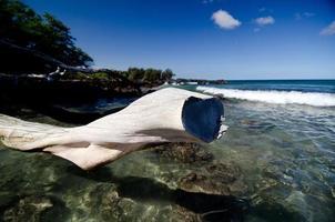 surfa närmar sig det vita stycket torrt trä på stranden 69 foto