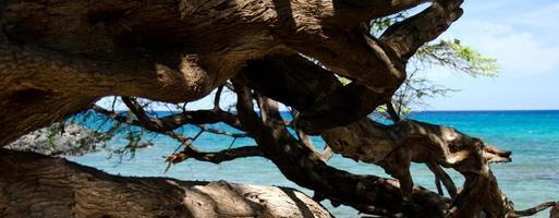 träd och vatten på stranden 69 foto