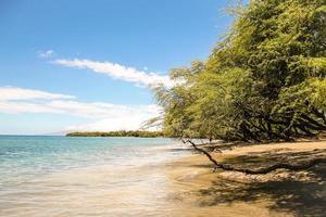 vacker maui strand foto