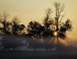 soluppgång genom dimma och träd
