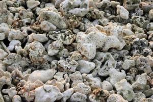 koraller foto