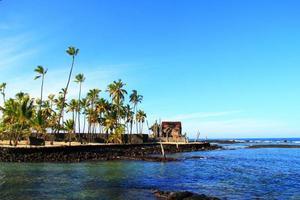 hawaii strand och kokosnöt palmträd foto