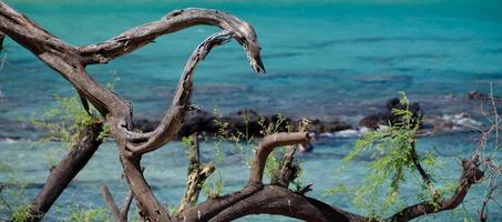underbara turkosa vatten på stranden 69 foto