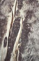 trä textur. gamla gamla paneler foto