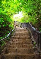 trappa till skogen gjord av trä foto