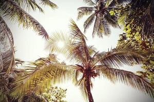 retro tonade och bleknade palmer naturbakgrund. foto