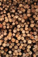 hög med trä. foto