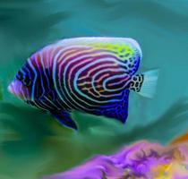 kejsare ängel fisk ungdom foto