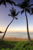 palmträd i gryningen på ulua stranden, maui, hawaii foto