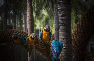 papegojor i den tropiska trädgården foto