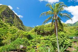 iao dalstatspark på maui hawaii foto