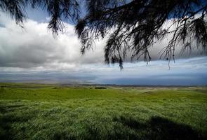 betesmarker i skuggor av järnträd på kohala bergsväg foto