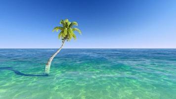 kokosnötter på stranden. foto