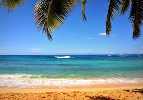 hav och kokosnöt palm foto