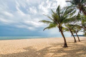 strand kantad med palmer