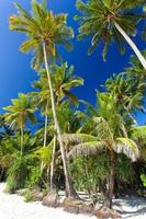 idyllisk tropisk scen