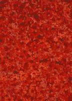 röd hibiskus foto