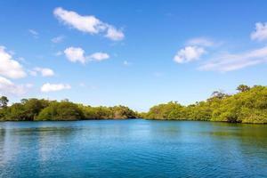 mangrover i galapagos foto
