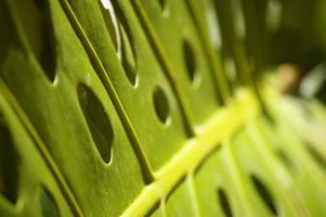 tropiskt blad foto