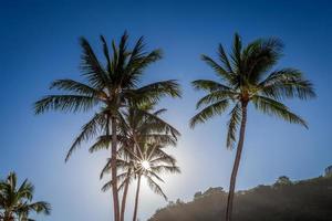 sol genom palmträdet foto