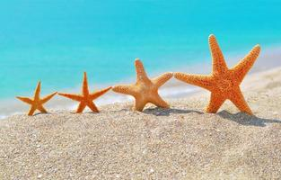 sjöstjärnor på stranden foto