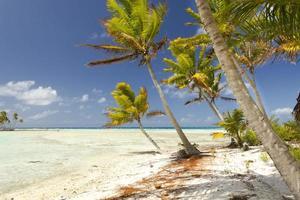 tropisk strand. Blå lagun