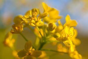 makro skott blommor. foto