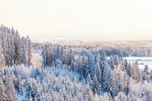 utsikt över skogen på vintern foto