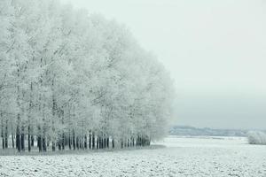 snöig vinterväg i ett fält foto