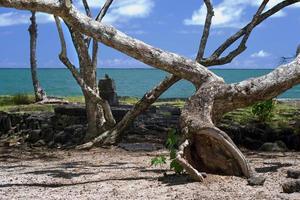 kokosnöönstrand med tropiska träd och sand foto