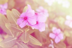 mjuk fokus, vacker blommabakgrund med färgfilter foto
