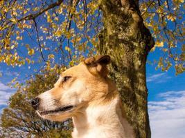 hund porträtt