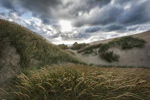dag i sanddynerna