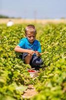 pojke i jordgubbefält foto