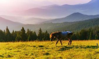 häst porträtt