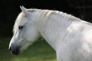 pferd, porträtt foto