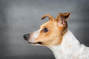 hund porträtt foto