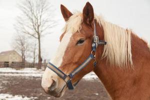 häst porträtt foto