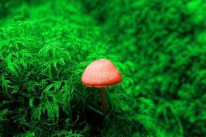 höst svamp överraskning foto