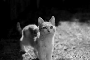 porträtt av katt foto