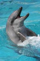 leende delfinstående foto