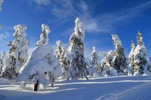 snöiga träd foto