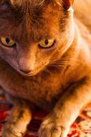 katt porträtt foto
