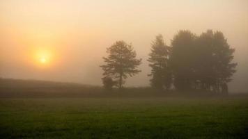 soluppgång på dimmig äng