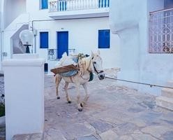 vit häst med bagage som går på gatan foto