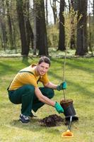 trädgårdsmästare planterar ungt träd foto