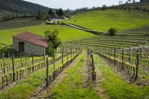 vingårdar i Toscana. Italien. Europa.
