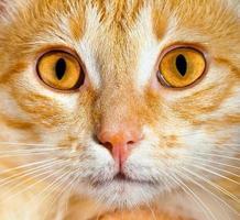 katt på nära håll foto