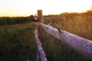staket foto
