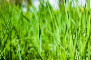 gräs på nära håll foto